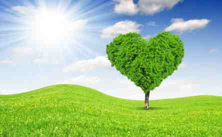 Spring landscape with tree in the shape of heart
